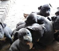 200  puppies for sale 6019515134