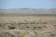 13 000  Cheap land in Wyoming