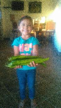 5  Chile Seed for Sale